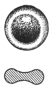 рис. 60. каждое такое 'красное кровяное тельце' имеет форму крошечной круглой подушечки, посредине вдавленной
